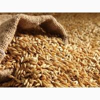 Купим пшеницу, горох в Курганской обл