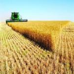 Реализация пшеницы 5 класса