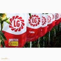 Семена кукурузы - гибриды Лимагрейн (Limagrain - импорт)