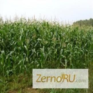 Кукуруза 1, 2 класса