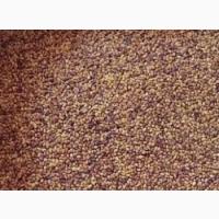 Продаем семена клевера