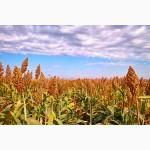 Реализация мелким оптом фуражного зернового сорго