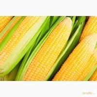Гибриды семена кукурузы П7709, П8400, ПР39Д81, ПР37Н01, ПР39Ф58, ПР39Х32 (Пионер, Pioneer)