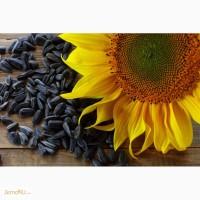 Гибриды семян подсолнечника - НК Неома (Сингента) - Clearfield