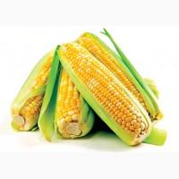 Гибриды семена Кукурузы (Pioneer, Singenta, Monsanto, NS, Limagrain)