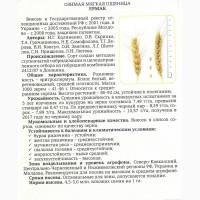 Семена озимой пшеницы урожая 2018г. сорт Ермак