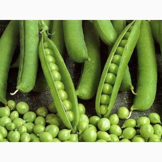 Семена гороха Аксайский усатый 7, Усатый кормовой ЭС