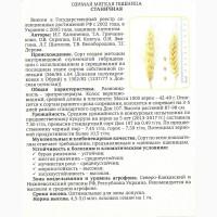 Семена Озимой пшеницы урожая 2018г. сорт Станичная