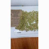 Чечевица тарелочная 7066-77 ГОСТ новый урожай