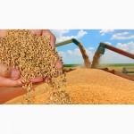Закупаем зерно, дорого