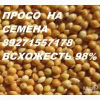 Просо Красное Саратовское-10. Желтое Золотистое 98 всхожесть ЧИСТ 99.36