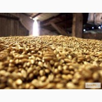 Кормовое зерно с доставкой в Калужскую область