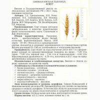 Семена Озимой пшеницы урожая 2018г. сорт Аскет