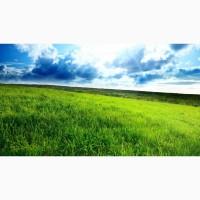 Травосмесь для долгосрочных пастбищ и заготовки кормов Зеленый луг