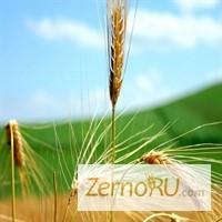 Продаем. пшеницу 5 класса оптом