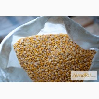 Продам зерно кукурузное фасованное. Производитель