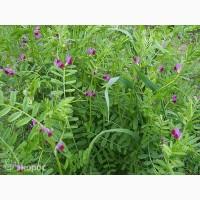 ООО НПП «Зарайские семена» продает фуражную вику яровую оптом и в розницу