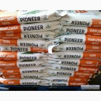 Семена гибридов подсолнечника кукурузы Pioneer, Syngenta, NS, LG и др