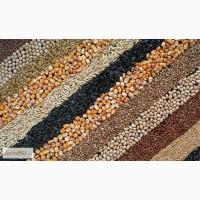 Закупаем ячмень, пшеницу и кукурузу фуражные ГОСТ