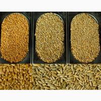 Закупаем фуражное зерно