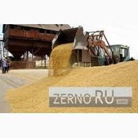 Пшеница 5 класса фураж