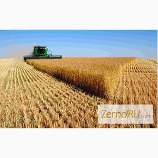 Куплю пшеницу с элеватора казахстан опросный лист для конвейера