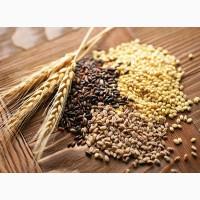 Семена озимых и яровых культур 2017