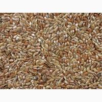 Семена льна масляничного сорт «Небесный»