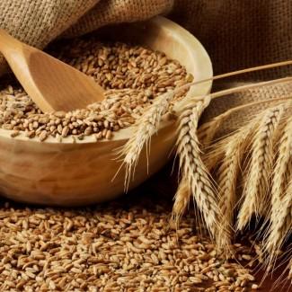 Закупаем пшеницу 3, 4 класс от производителя