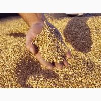 Фуражное зерно с доставкой по Ярославской области