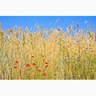 Продаем пшеницу с элеватора декларация элеватора