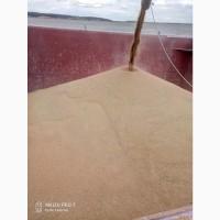 Пшеница фуражная 5 класса с загрузкой на судно