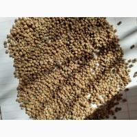 Продаю кориандр зерно неочищенное