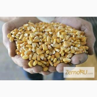 Кукуруза DAP Белоруссия