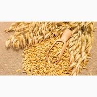 Семена ярового овса сорт Валдин-765