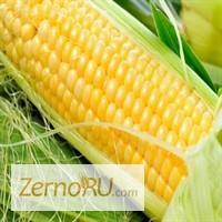 Продаем_ кукурузу 3, 4 класса (фураж)