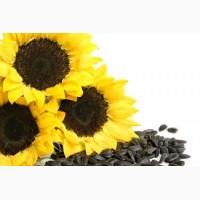 Семена гибридов и сортов подсолнечника