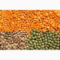 ООО НПП «Зарайские семена» закупает семена чечевицы зелёной и красной от 20 тонн