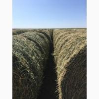 Продаем сено люцерны