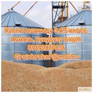 Закупаем пшеницу 3, 4 5 класс в Волгоградской и соседних областях