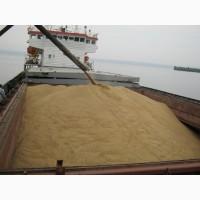 Купим оптом пшеницу 3 класс в порту Астрахань