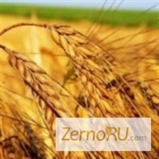 Продаётся пшеница 3 класса