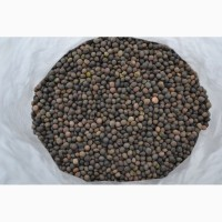 ООО НПП «Зарайские семена» закупает семена вики яровой от 40 тонн