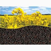 Продажа семян озимого рапса