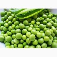 Закупаем семена:горох полевой пелюшка от 20 тонн