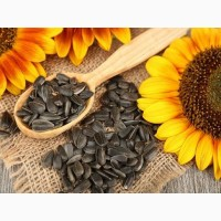 Семена подсолнечника (гибриды системы Clearfield)