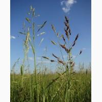 Семена суданской травы Новосибирская 84 (РС-1)