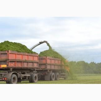 Перевозка и уборка зерна.Услуги зерновозов