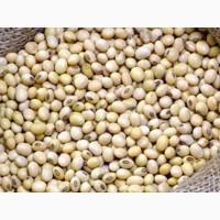 Соя бобы протеин 20-25%