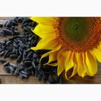 Семена подсолнечника гибриды системы SUMO